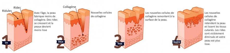 production-de-collagene